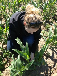 Plant Scientist:Field Agronomist