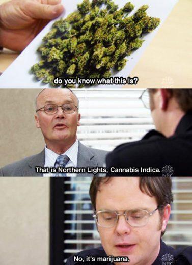 employee drug testing marijuana